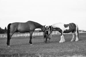 Soulflection - Pferde coachen besser